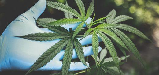 Британська поліція пропонує давати наркозалежним в'язням марихуану