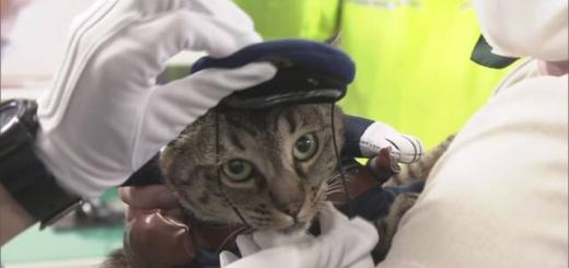 У Японії кицька на один день стала начальницею поліції