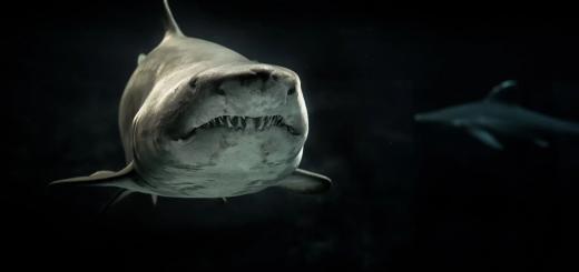 Австралійцю дозолили забрати зуб напавшої на нього акули попри заборону закону