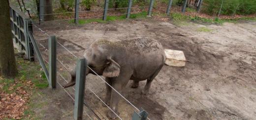 В США Слон подав в суд на зоопарк через умови утримання