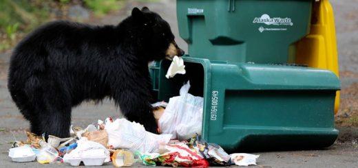 У США чоловік побачив ведмедя у смітнику і тепер вимагає відшкодування за переляк