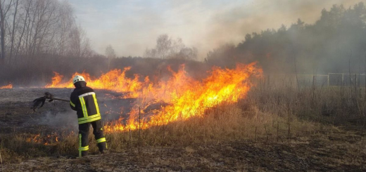 На Тернопільщині чоловік відшкодує державі 175 000 грн за підпал лісу
